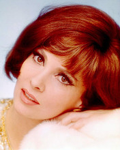 This is an image of 262291 Gina Lollobrigida Photograph & Poster