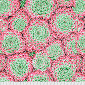 Philip Jacobs PWPJ091 Succulent Pink Cotton Quilting Fabric By Yard