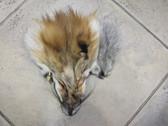 RED FOX FACES CLEAN