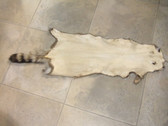 Natural American Racoon Skin, Size 4XL