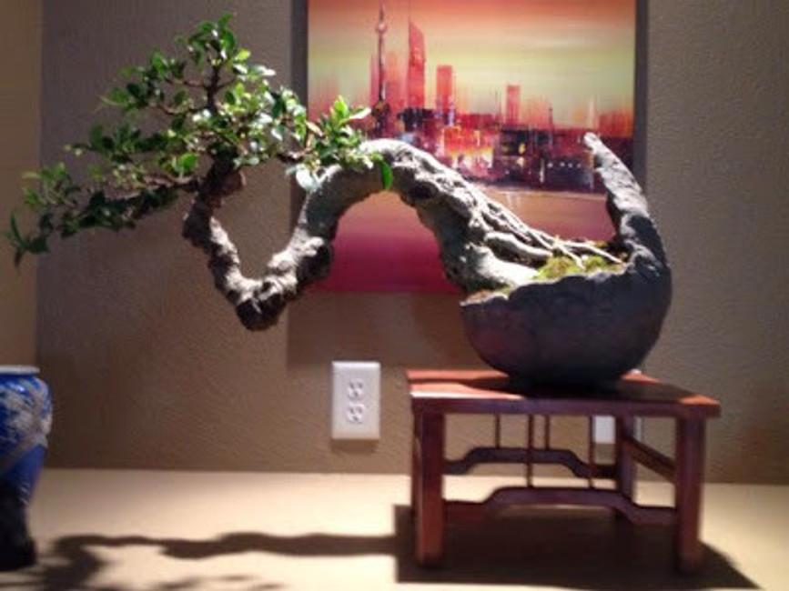 Customer Bonsai in Iker Pots