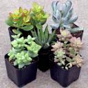 Indoor Succulent Collection (5)