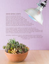 The Essential Guide to Growing Succulents Indoors (E-Book) - Look Inside 1
