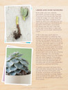 The Essential Guide to Growing Succulents Indoors (E-Book) - Look Inside 5