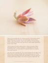 The Secrets to Propagating Succulents (E-Book) - Look Inside 3
