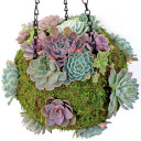 Ball planter with plants