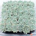 Bulk Succulent Tray - Blue Fairy - Tray as Shipped
