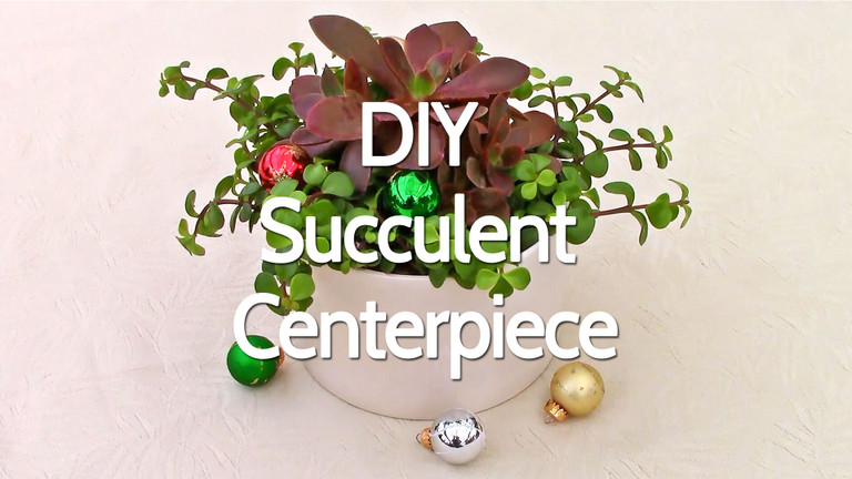 Do-It-Yourself Succulent Centerpiece