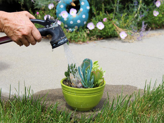 When should I water my succulents?