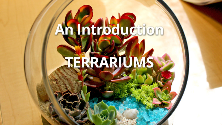 Succulent Terrariums - An Introduction