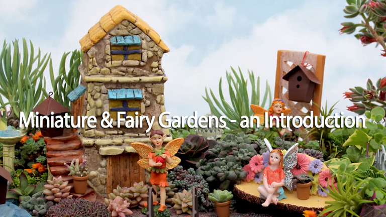 Miniature & Fairy Gardens with Succulents - An Introduction