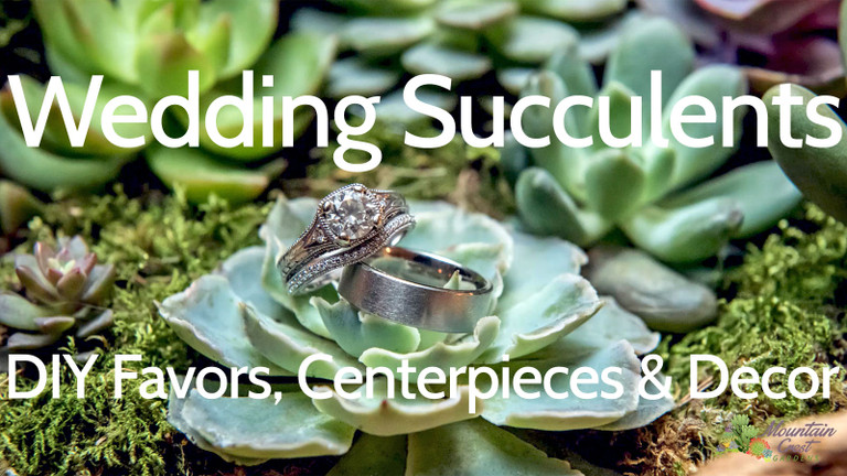 Wedding Succulents - An Introduction
