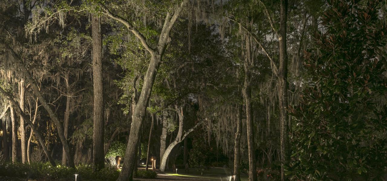 Landscape lighting large trees