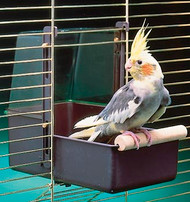 Penn-Plax Cockatiel Bath Large