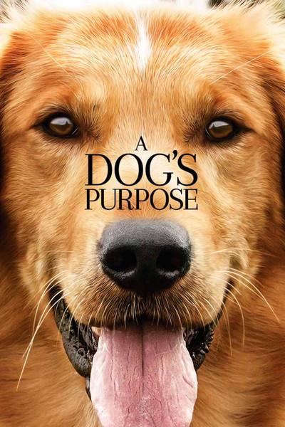 A Dog's Purpose [iTunes HD]