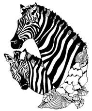 Zebra - 49A02