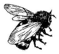 Bee - 40A01