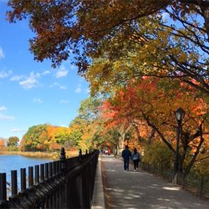 Fall Colors in Central Park   Central Park Reservoir