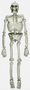670306 Cemetery Life Size Plastic Skeleton