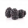 Blackberry-FA
