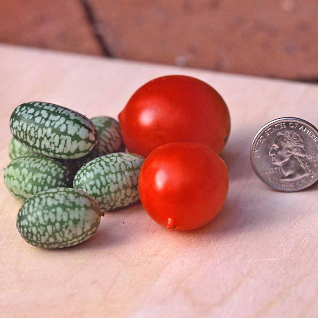 Cucamelon / Mouse Melon - (Melothria scabra)