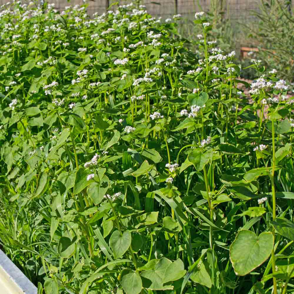 Garden cover up mix cover crop seeds terroir seeds - Cover crops for vegetable gardens ...