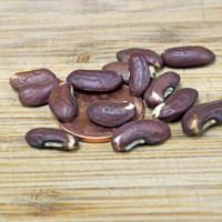 Asparagus Green Podded Bean Seeds - (Vigna unguiculata)