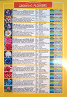 Growing Flowers Planting Chart