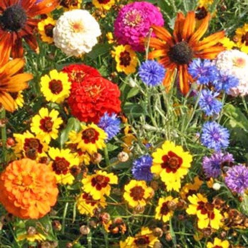 Children's Garden Flower Mix