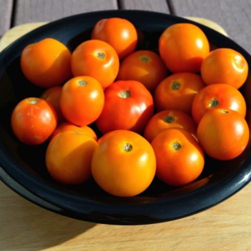 Flamme (Jaune Flamme) Tomato - (Lycopersicon lycopersicum)