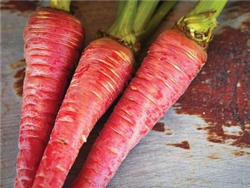 Pusa Rudhira Carrot (Red Carrot) - (Daucus carota var. sativus)