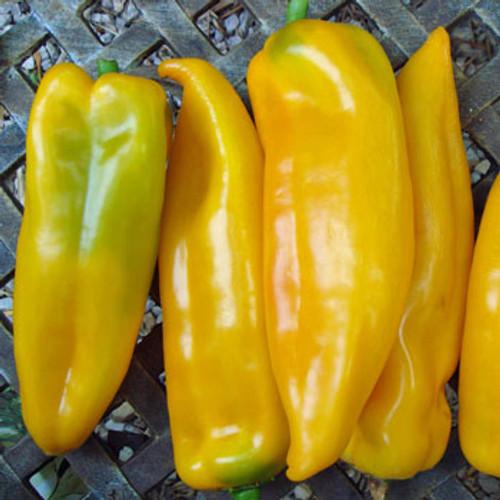 Corno Di Toro Giallo Sweet Pepper - (Capsicum annuum)