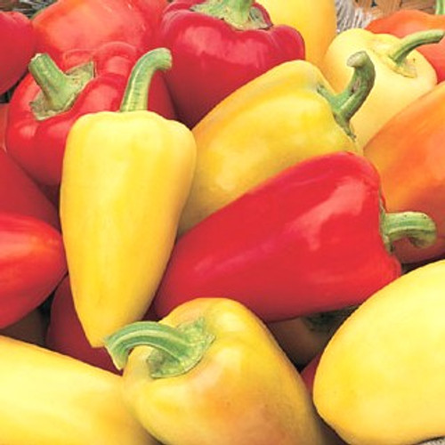 Roumanian Sweet Pepper - (Capsicum annuum)