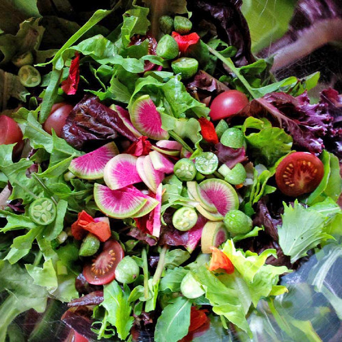 Salad Bar Collection