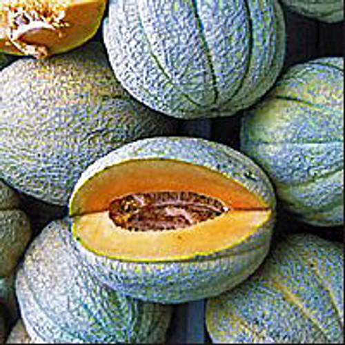 Pride of Wisconsin Melon - (Cucumis melo)