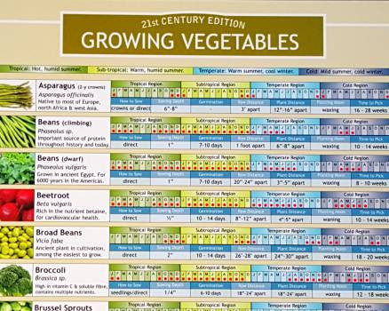 Growing Vegetables Planting Chart Click here to enlarge. Growing Vegetables Planting Chart   Terroir Seeds