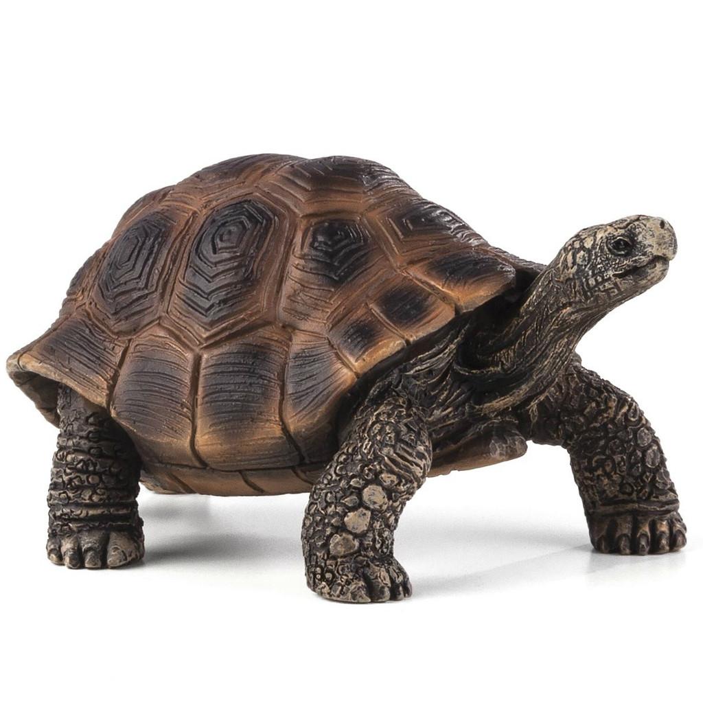 Giant Tortoise Mojo