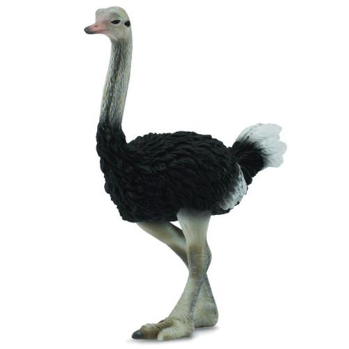 Ostrich CollectA