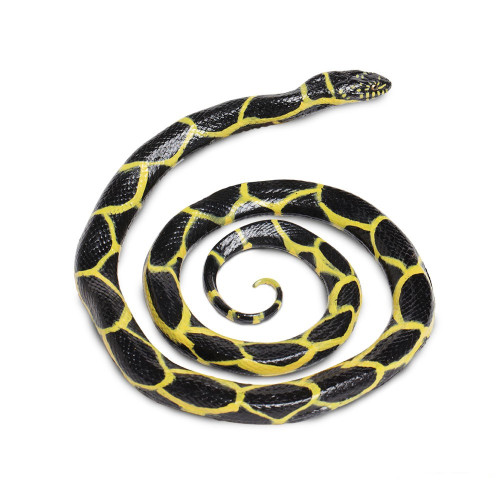 Chain Kingsnake Jumbo