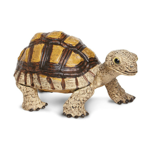 Tortoise Jumbo Safari