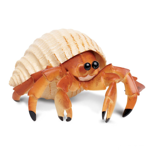 Hermit Crab Jumbo