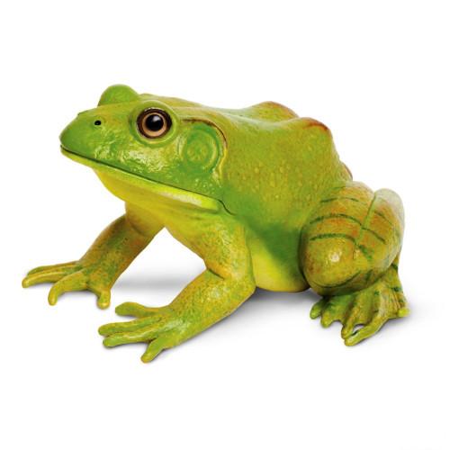 American Bullfrog Jumbo