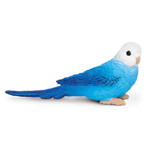 Budgie Blue Safari