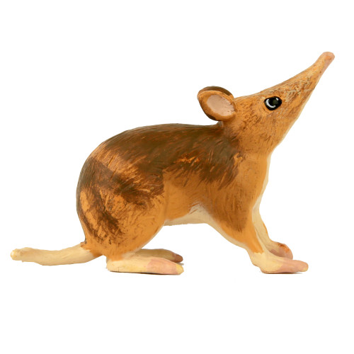 Small Bandicoot