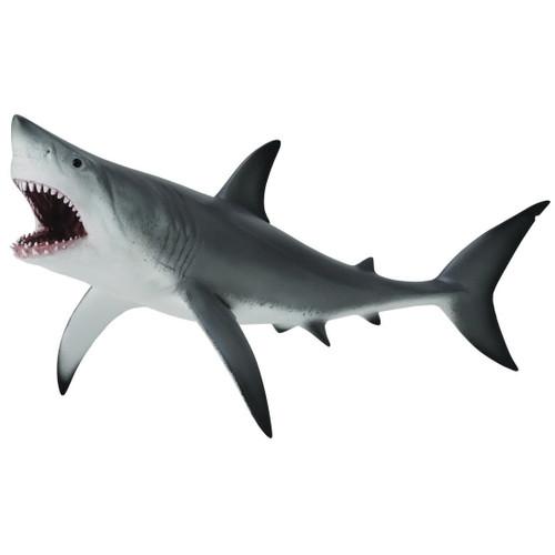 Great White Shark 2015