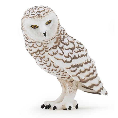 Snowy Owl Papo
