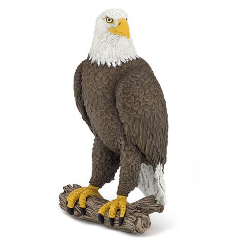 Bald Sea Eagle