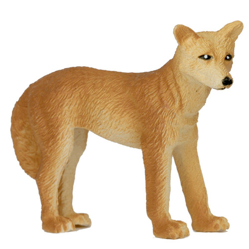 Small Dingo