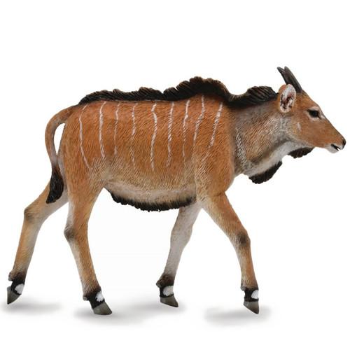 Giant Eland Calf