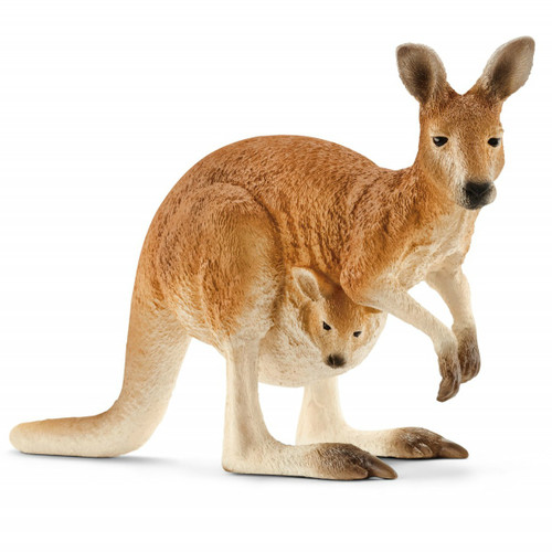 Kangaroo Female